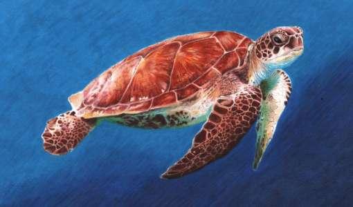 Bunte Unterwasserwelt: Zeichnen mit Filz- und Farbstiften
