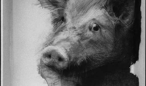 Stillleben und Tiere zeichnen nach Vorlage
