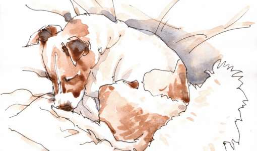 Auf den Hund gekommen – die bewegte Tierskizze