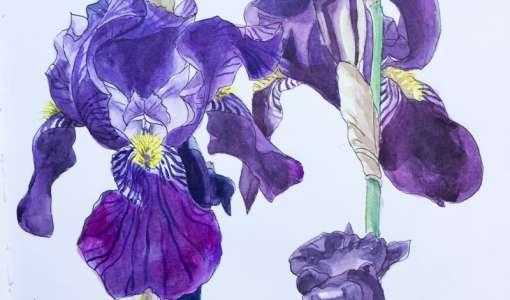 **Botanisches Aquarell