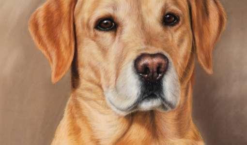 Pastellmalerei: Tiere in Haus und Hof