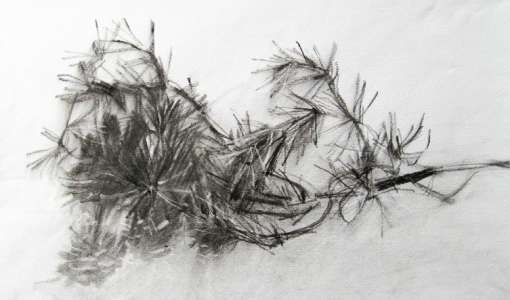 Zeichnen mit Kohle – Ausdrucksstark in klassischem Schwarz/Weiss