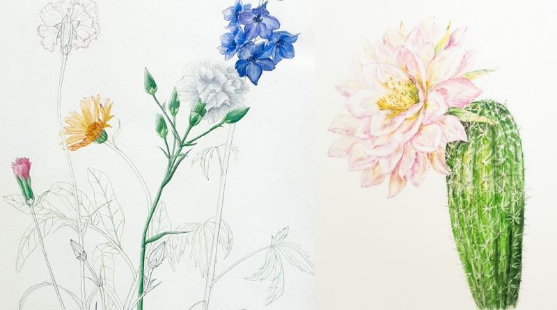 Botanisches Aquarell